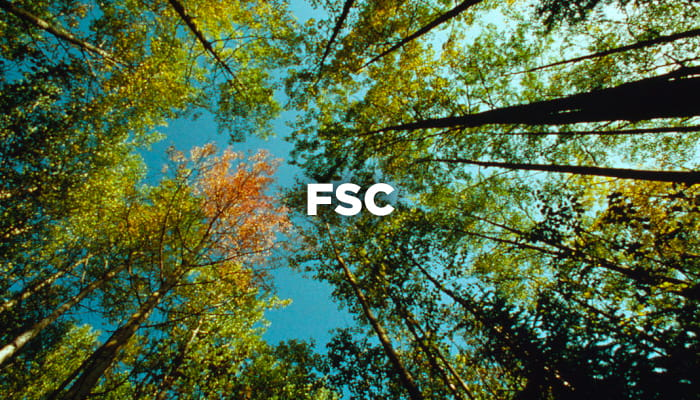 FSC regina paper for people